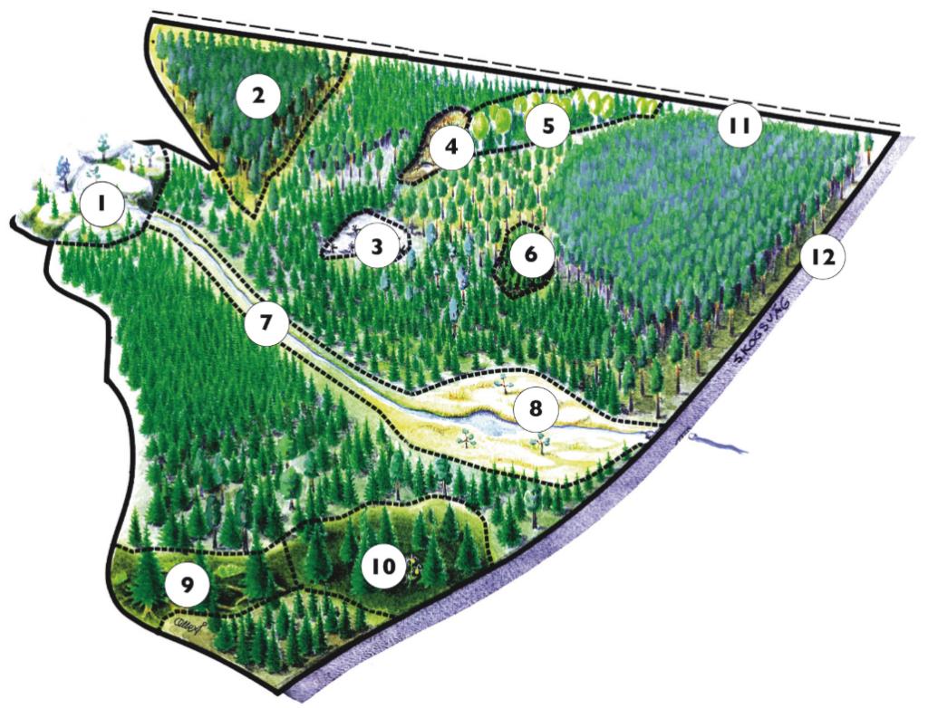 Karta skog